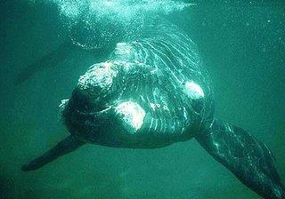 Whale11