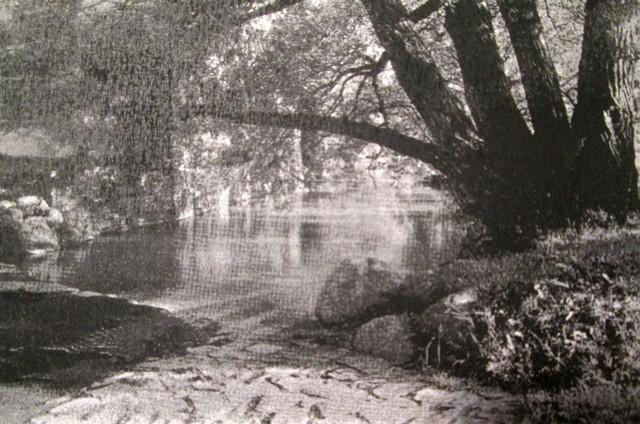 Roundwood 082